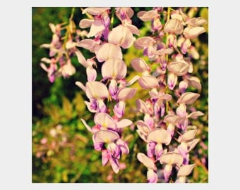Wisteria Photo, Pink Green Purple, Flower Photograph, Square Photo Print, Pretty Flower Art, Spring Photo, Bold Floral Wall Art, Lavender