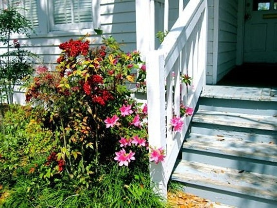 Front Stoop: fine art photograph print of southern front porch with steps and flowers in red, pink, green, yellow, and white
