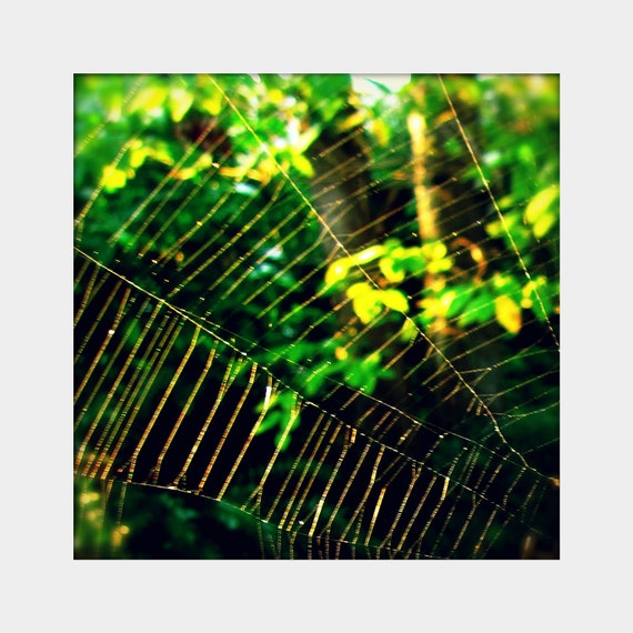 Spider Web: square fine art photograph print in green, yellow, and black (outdoor nature)