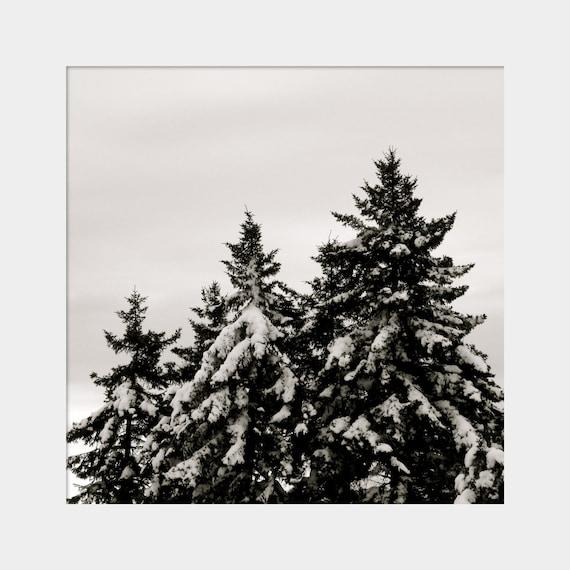 Evergreen Tree Art, Tree Snow Photo, Pine Trees Photo, Winter Photograph, Winter Wall Art, Evergreen Tree Photo, Snow Photo, Black White Art