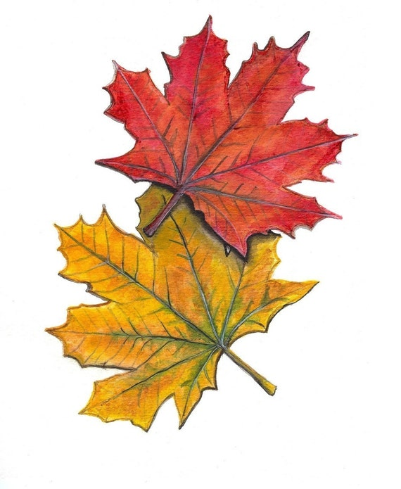 Set of 6 Note Cards - Autumn Maple Leaves