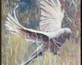White Dove Original painting mixed media 8x10
