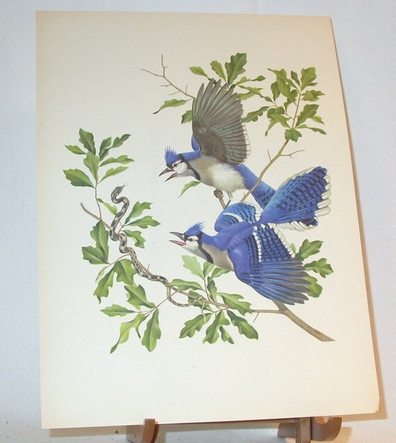 Set of 5 Vintage Menaboni's Bird Prints - Blue Jay, Woodpecker, Hummingbird, Wood Thrush, and Kentucky Warbler - Reduced