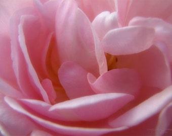 Pink Pearls - Macro Rose Metallic Photo Print