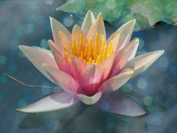 A Dream Within A Dream - Water Lily Photo Art Print