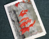 Red Maple Leaves Holiday Cards - Rustic, Country Christmas Cards - North Carolina Photography - Handmade, Blank Inside