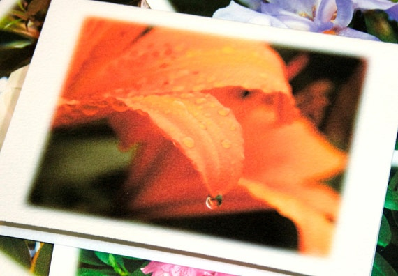 Flower Photography Note Card Set - 4 Different Cards - North Carolina Floral, Garden Nature Art, Stationery