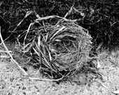 Bird Nest 8x10