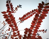 ZigZag Red Leaves