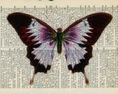 vintage violet butterfly printed on old dictionary page