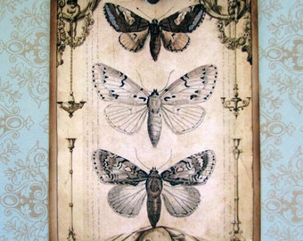 Butterfly Gift Tags Shabby Vintage