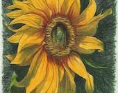 Original Sunflower drawing