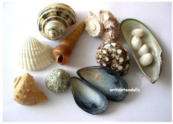 16 Shells for children play, nature table and home decoration, Waldorf education