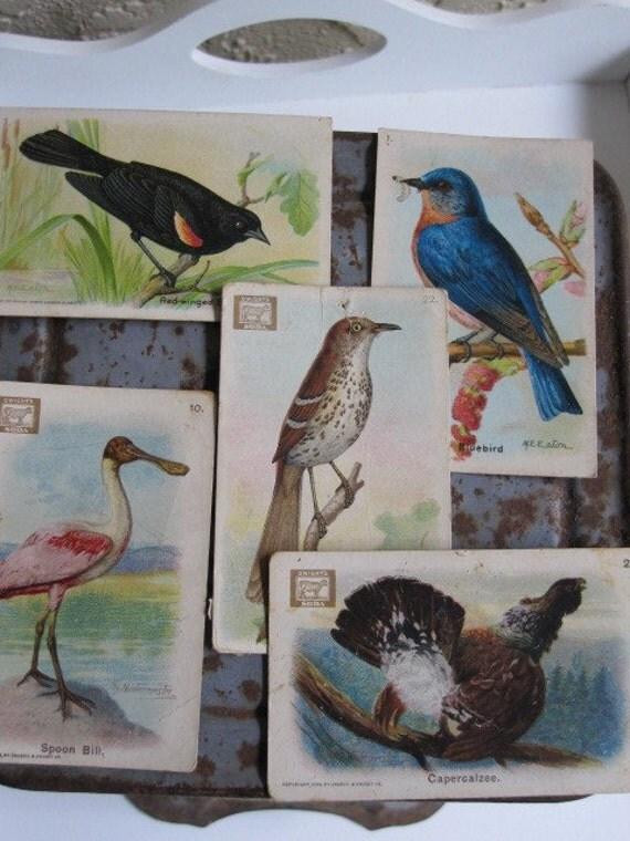 Vintage Bird Trading Cards