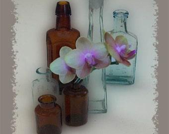 Antique Bottles Giclee Art Print, 8x10 unframed art, Home Decor, EBSQ
