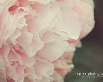 pink delight - peony limited edition photograph