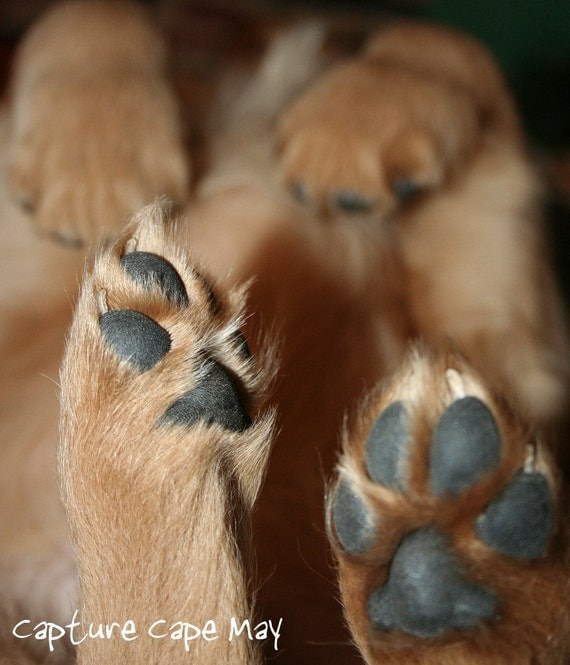 Puppy Feet. Signed 8x10 Fine Art Photography Print.
