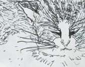 Cat Close Up ACEO