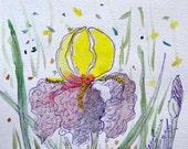 Iris Ink Drawing