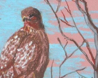 Hawk in Winter