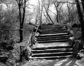 Central Park Steps Photograph