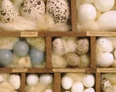Natural History Art Print - Bird Egg Collection - Speckles and Cream