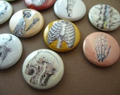 Anatomy 102 -  10 one inch pinback buttons or magnets