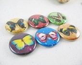 Butterfly Fridge Magnets, Refrigerator Magnets, Nature Decor, Butterfly Wings, Pinback Button, Wine Charms, Cute Fridge Magnet 1156