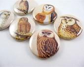 6 owl fridge magnets, Refrigerator Magnets, Home & Living, Organization, Kitchen Decor, Parliament of Owls No 2 / Magnabilities 1112