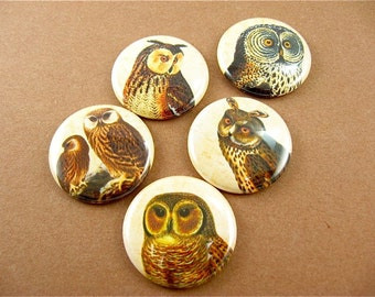 Owl Magnet Set , Nature, Bird Fridge Magnets, Cute Fridge Magnets, Home Decor, Pin Back Button, Wine Charms, A Parliament of Owls 1 1120