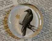 Crow Magnet - Jumbo Glass Magnet - Black Crow or Raven