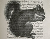Squirrel Print on Vintage French Text Book Page - 5 x 7