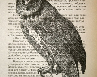 Owl Print - Vintage Russian Book Page Print - 5 x 7 Horned Owl Bird Print - Nature Print