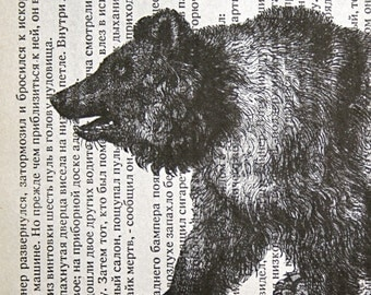 Bear Print on Russian Text - 5 x 7 Grizzly Bear Basil