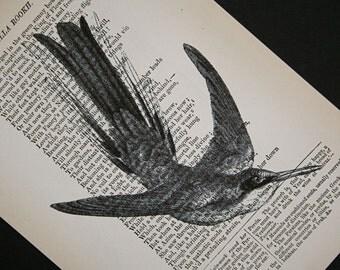 Hummingbird Print on Vintage Book Page - 5 x 7 Hummingbird 2
