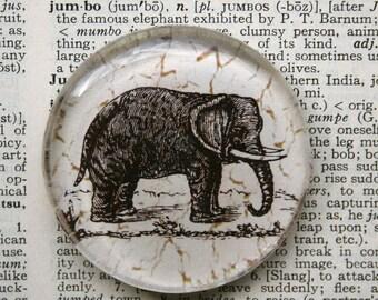 Elephant Magnet - Jumbo Glass Magnet