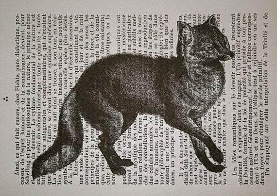 Slinky Fox Print on French Text - 5 x 7