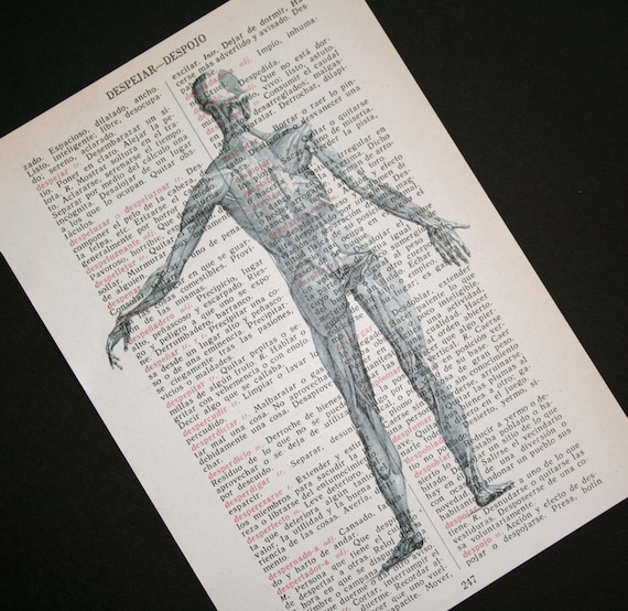 Anatomical Muscle Man Print on Spanish Dictionary - 5 x 7