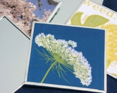 Queen Anne Square Pocket Mirror Flower Wildflower Queen Anne's Lace White Blue Spring Nature Botanic Natural History Glass