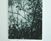 Tree no. 3-  Original Miniature Mezzotint Print