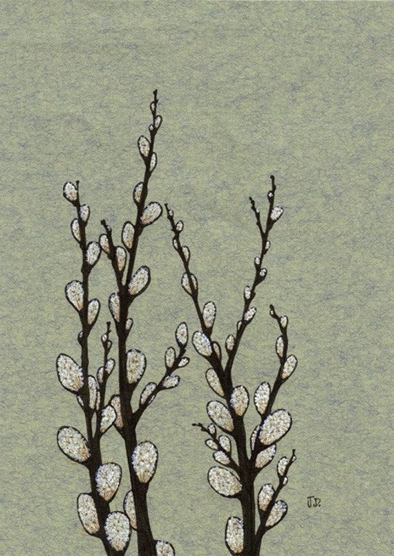 Spring Pussy Willows - Limited Edition Archival Fine Art Print