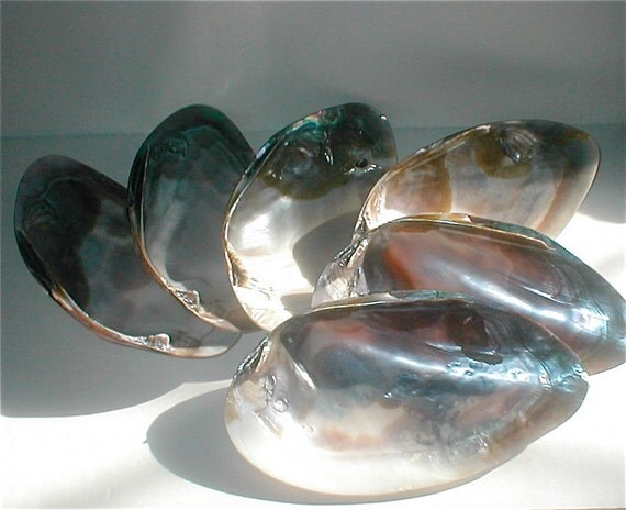 Abalone Shell Dish Set of 6 - Polished Large Shells - Mother of Pearl Plates