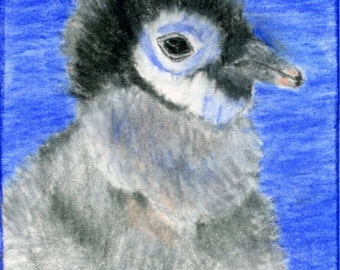 Fuzzy Baby Penguin ACEO Print Color Pencil 2.5 X 3.5