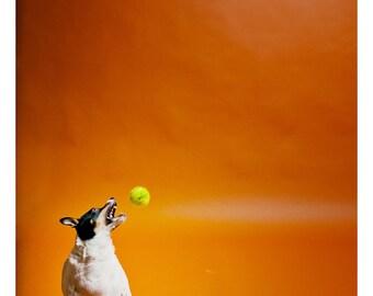 Snatch (dog photography)