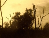 Nude Branches with Fading Sun