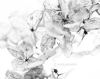 White photo from the Nature Graphics Series Original signed fine art photography print 6x6 inches Neutral home decor White wall art Nursery