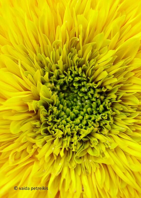 Yellow floral home decor flower print Midsummer dream 5x7 fine art photo Macro bright sunflower bloom Bright yellow nursery wall art