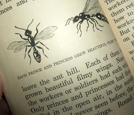 1940 LIFE IN AN ANT HILL ELEMENTARY SCIENCE BOOK