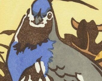 MOUNTAIN QUAIL blank bird greeting card