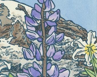 PARADISE WILDFLOWERS original hand colored letterpress print featuring Mt. Rainier